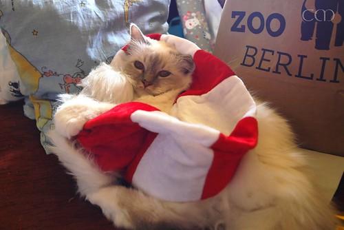 Wishing you a peaceful Christmas!