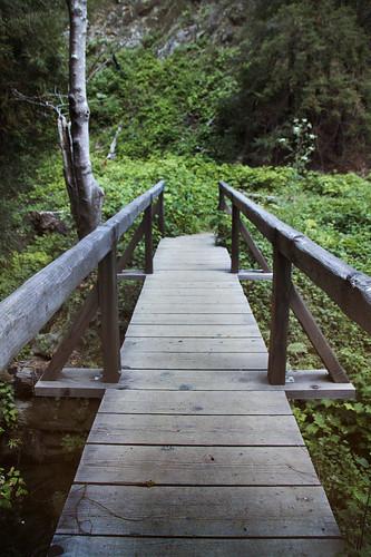 Tanbark Trail