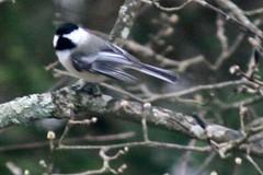 bird IMG_6432