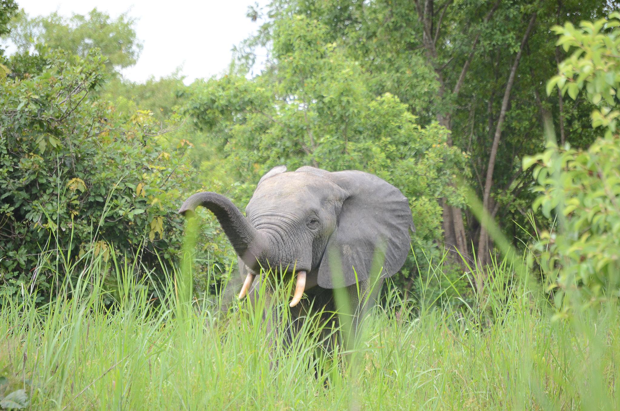 Elephant | Mole