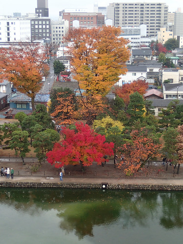 Koyo Red Autumn Leaves Maple Tree viewed from top of Matsumoto Castle