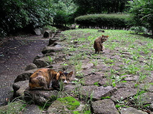 Three cats | by Blue Lotus