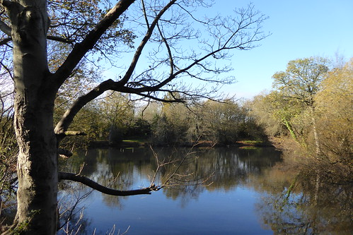 Pond near Stanmore