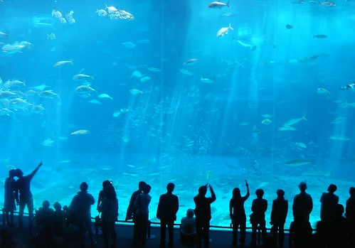 20050314 Okinawa-Churaumi Aquarium 037 | by Carol^-^