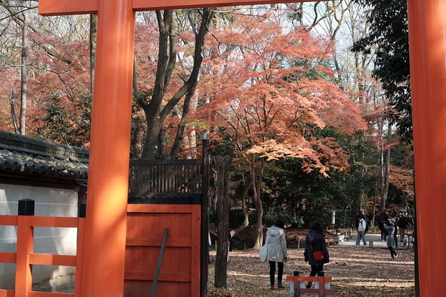 Torii and the road to the next shrine