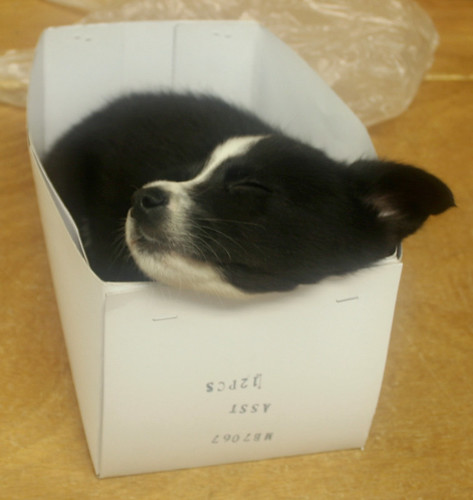 sleeping in the box | by Kaha X