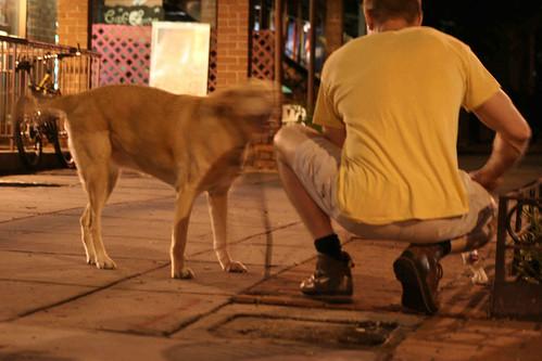 Dog Days Nw Dog Training