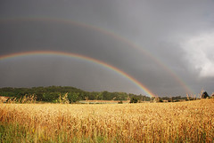 Arc en ciel sur un champ de ble / rainbow over a wheat field | by Laurence TERRAS