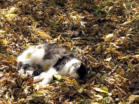 Sacked Out Smudge 1 | by Farmgirl Susan