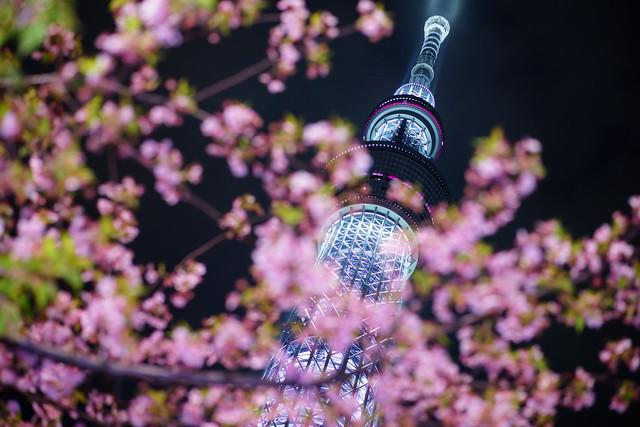 "Tokyo-Skytree ""Bloom of Cherry Blossom"" ③"