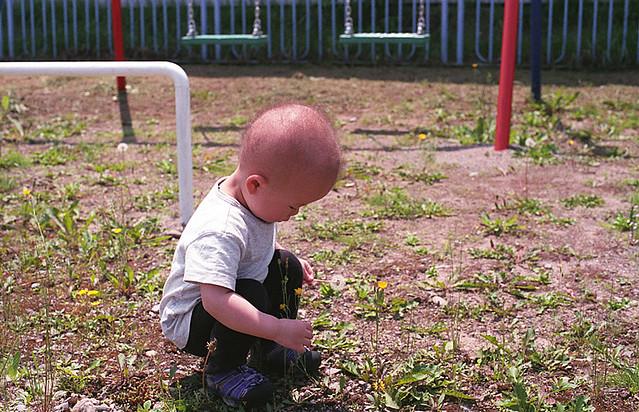 たんぽぽを摘む子