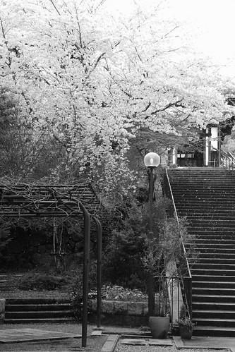 Nara on APR 04, 2016 (3)