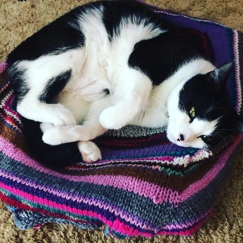 #philthecat appreciates my #knitting