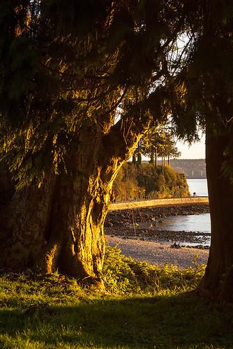 Seawall Through the Trees