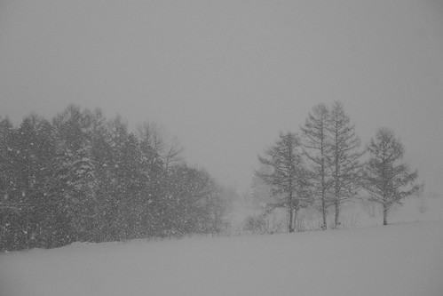 Hills and Trees at Biei on JAN 08, 2016 (1)