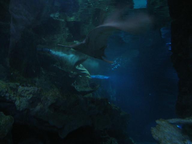 Guam 4 - Underwater World + Gun Beach