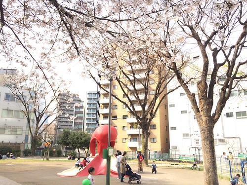 恵比寿タコ公園の桜 2016.3.29