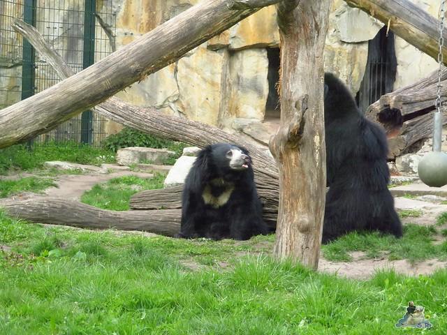 Zoo Berlin 29.04.2016   018