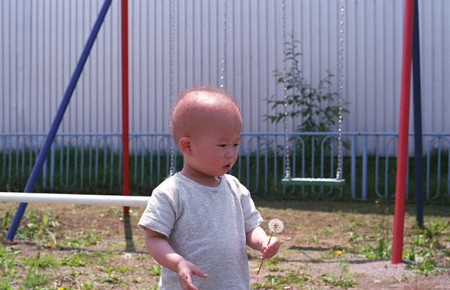 たんぽぽの綿毛を持つ子