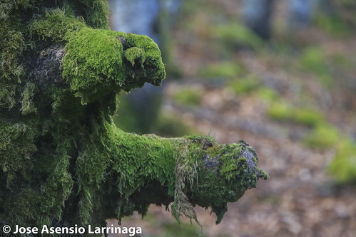Parque natural de Gorbeia #DePaseoConLarri #Flickr -2808