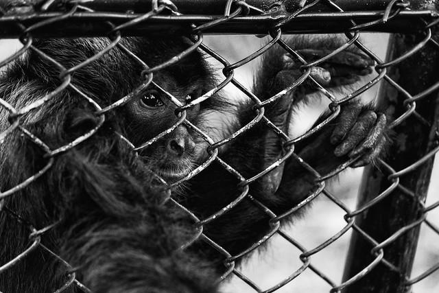 Zoológico Santafé Medellín - Colombia