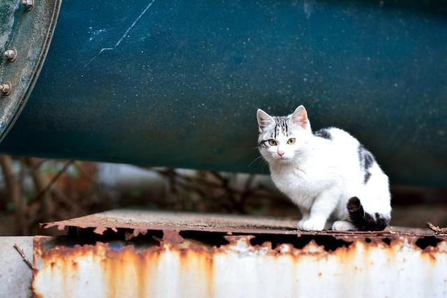 廃墟にたたずむネコの写真