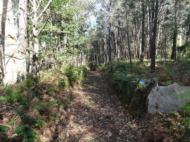 Camino en el monte San Lois Miñortos