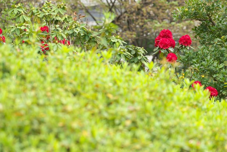 東京路地裏散歩 旧芝離宮恩賜庭園 2016年4月10日