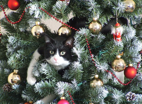 Cat in Xmas Tree | by MdM1157