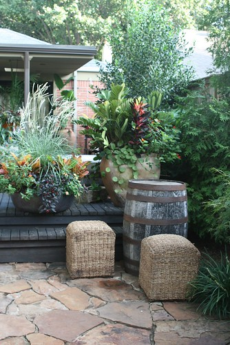 container garden grouping at mcmayhill baker home flickr. Black Bedroom Furniture Sets. Home Design Ideas