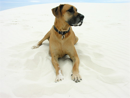 Dune Dog | by Laertes