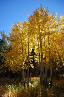 Aspen on Stagecoach | by Rob Lee