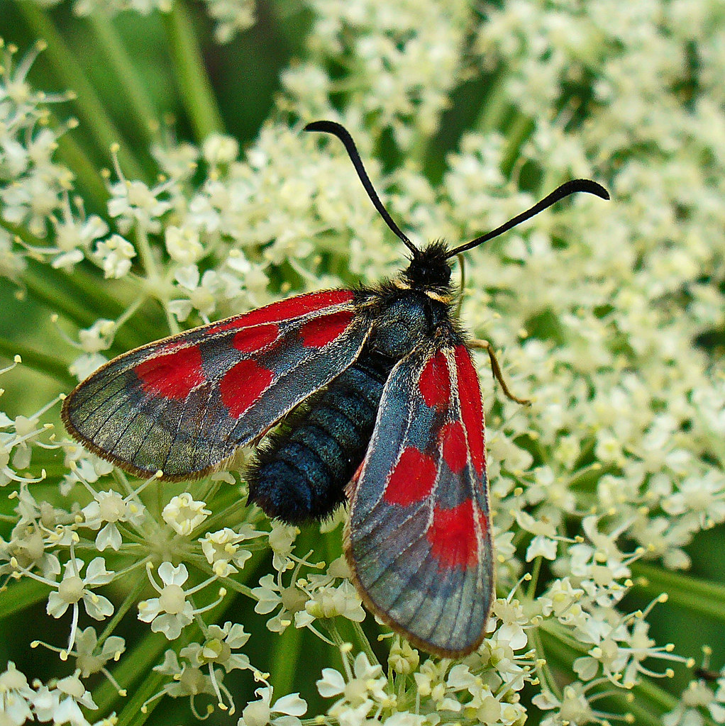 Spinnen Im Garten: Insekten Käfer Schmetterlinge Spinnen Raupen
