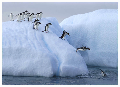 Penguin Slide | by Photographers Eye