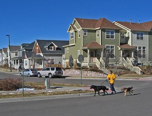 Denver Area Dog Walking Services