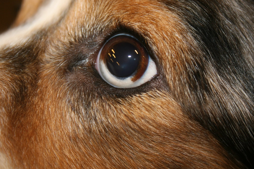 Winston's Eye