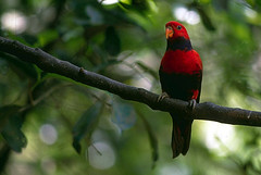 Lovely-Red-Bird | by useitinfo