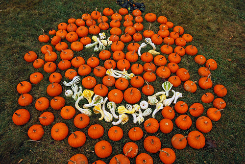 pumpkins | by Paul Keleher