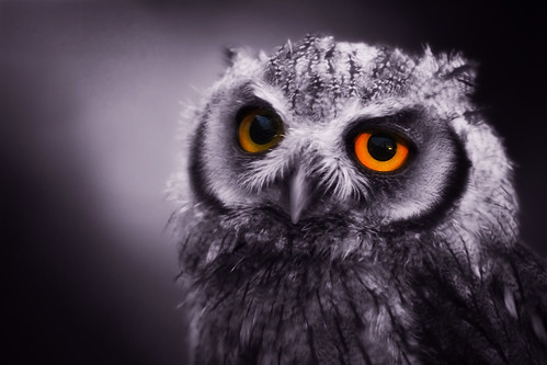 Eyes Of A Night Owl | by left-hand