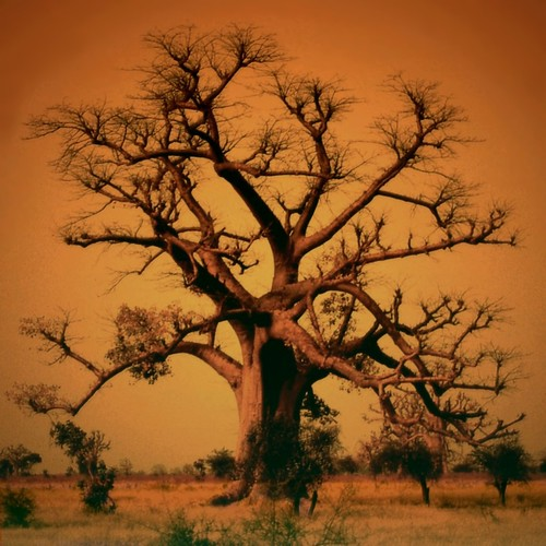 The Sahel Good Giant (Le grand baobab - The African Tree of Life) | by Osvaldo_Zoom