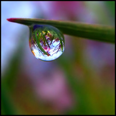 Garry Oak Ecosystem in a Dewdrop | by ecstaticist - evanleeson.com