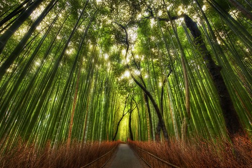 The Bamboo Forest and some great Twitter Lists to follow | by Stuck in Customs