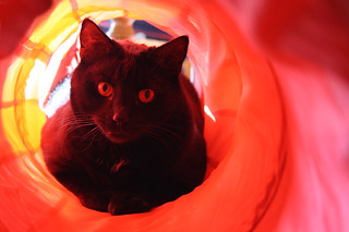 Blacky As My Tunnel Vision Cat!! (EXPLORED) | by Michelle ~ Blacky ~ Champaz's Captures....