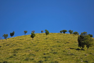 Trees on a Hill | by goingslowly