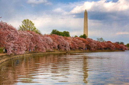 Washington, DC - Cherry Blossom Festival | by PeterPanFan