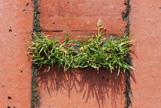 Grass Between Bricks | by erikrasmussen