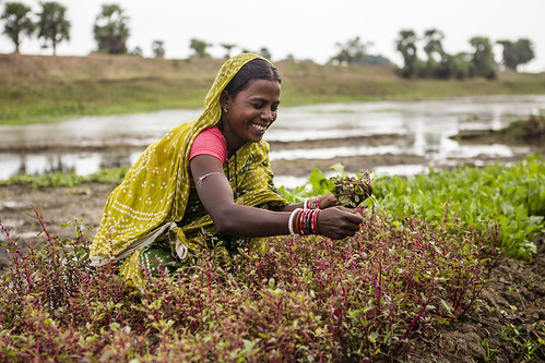 Women Adapt to Climate Change in Odisha | by UNDP in India