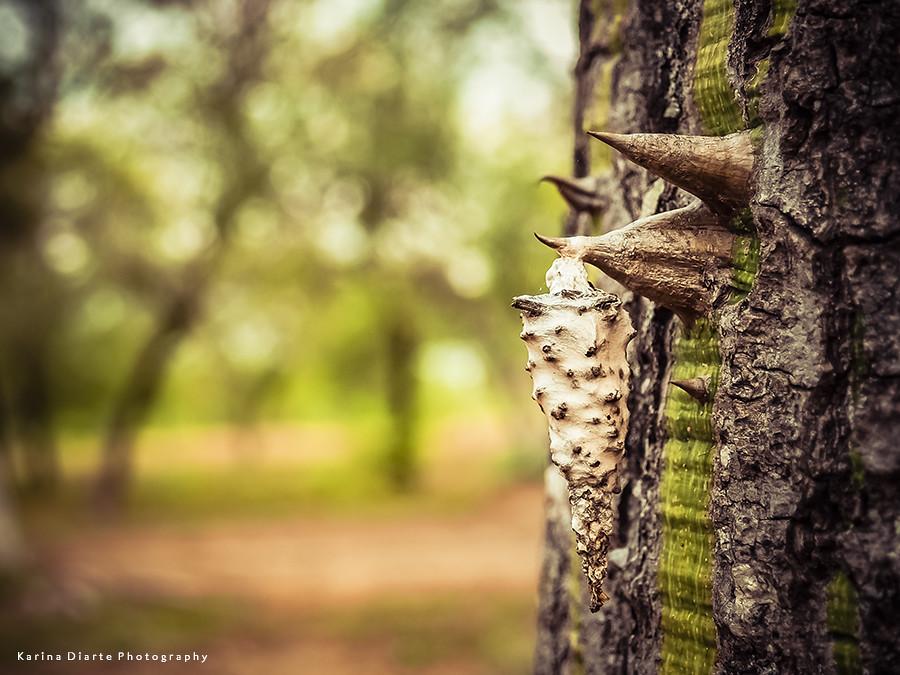 Bicho Canasto - Bagworm Moth