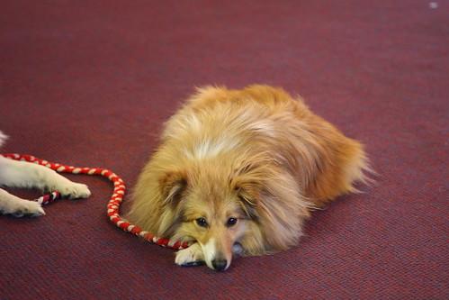 Dog Obedience Training South Shore Massachusetts