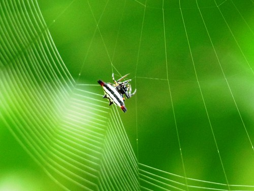 A spider loves its work | by Jkadavoor (Jee)